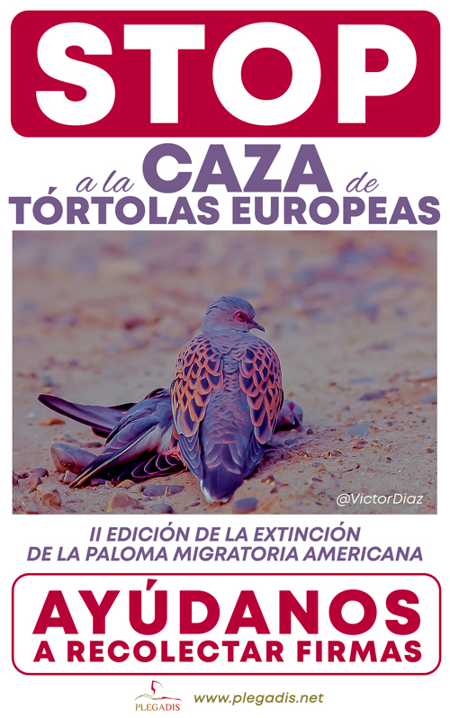 STOP HUNTING TURTLE DOVES